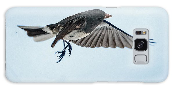 Dark-eyed Junco Flying Galaxy Case
