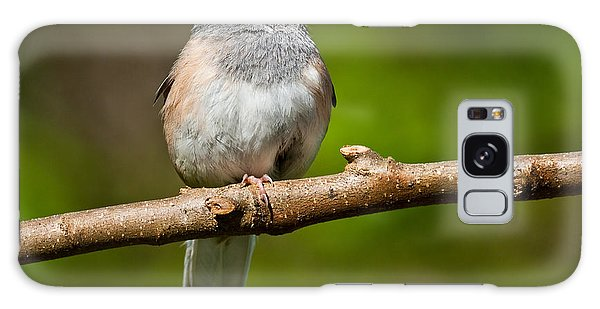 Dark Eyed Junco Perched On A Branch Galaxy Case