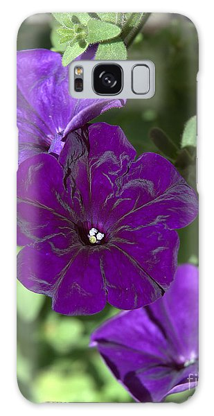 Dark Purple Petunias Galaxy Case