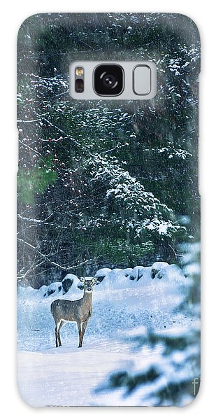 White-tailed Deer Galaxy Case - Deer In A Snowy Glade by Diane Diederich