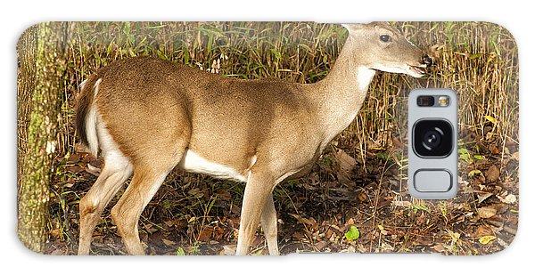 Deer In Morning Ligh Galaxy Case