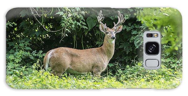 Eastern White Tail Deer Galaxy Case