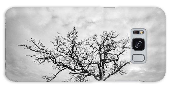 Delaware Park Winter Oak Galaxy Case by Chris Bordeleau