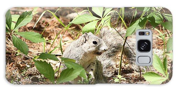 Delmarva Fox Squirrel - Local Rock Star Galaxy Case