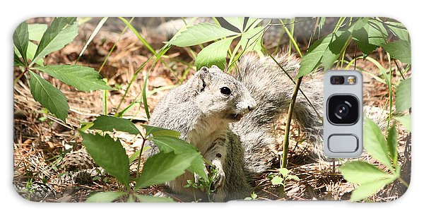 Delmarva Fox Squirrel - Local Rock Star Galaxy Case