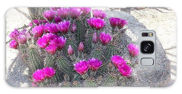 Desert Cactus Galaxy Case