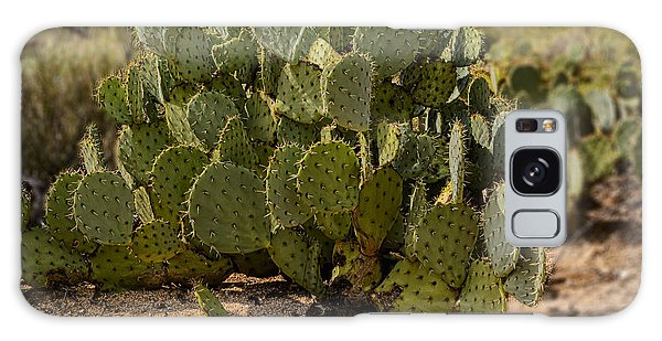 Desert Prickly-pear No6 Galaxy Case