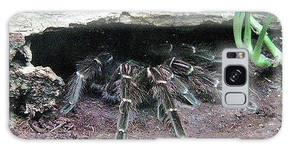 Desert Tarantula Galaxy Case