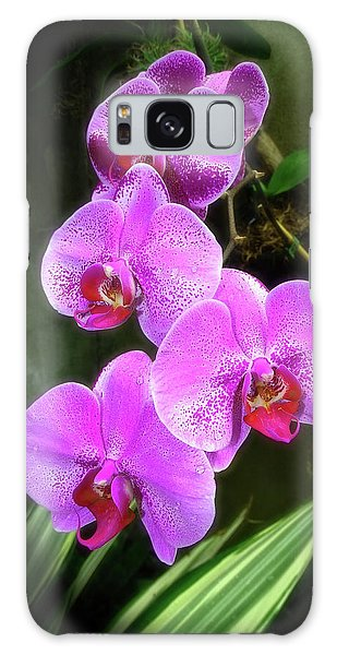 Dew-kissed Moth Orchids Galaxy Case