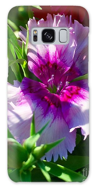 Dianthus Carnation Galaxy Case