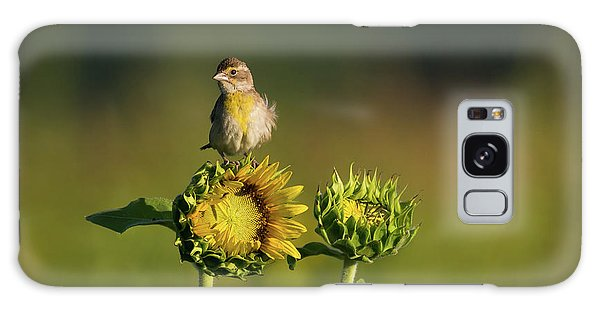 Dickcissel Sunflower Galaxy Case
