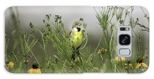 Dickcissel With Mexican Hat Galaxy Case by Robert Frederick