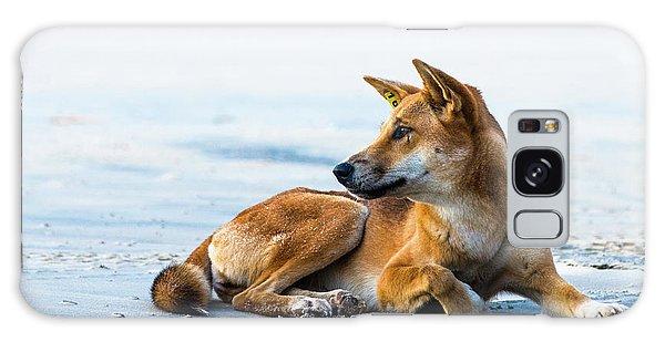 Dingo On Fraser Island Beach Galaxy Case