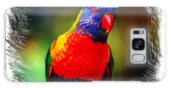 Do-00153 Colourful Lorikeet Galaxy Case by Digital Oil