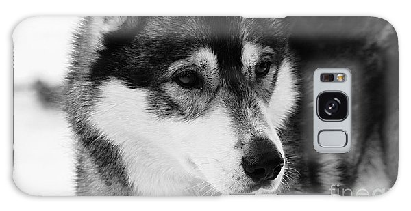 Dog - Monochrome 3 Galaxy Case