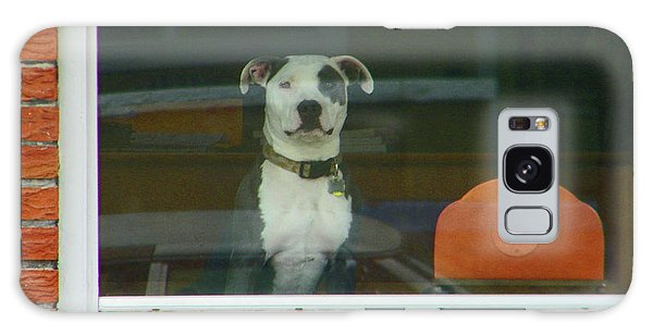 Doggie In The Window Galaxy Case by Lenore Senior