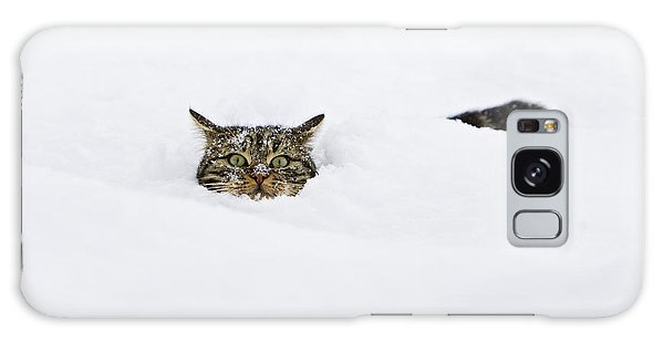 Domestic Cat Felis Catus In Deep Snow Galaxy Case