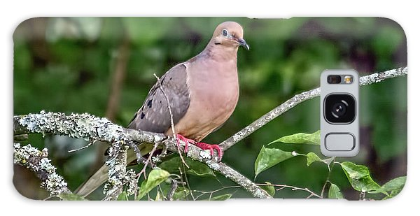 Dove On A Branch Galaxy Case