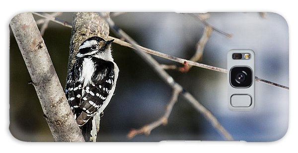 Downy Woodpecker Galaxy Case by Dan Traun