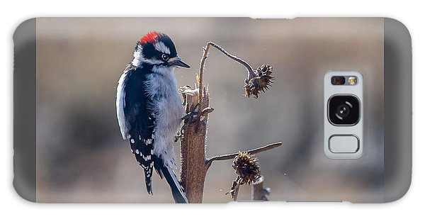 Downy Woodpecker Finding Insects From Sunflower Stem. Galaxy Case