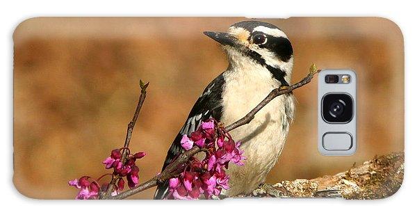 Downy Woodpecker In Spring Galaxy Case