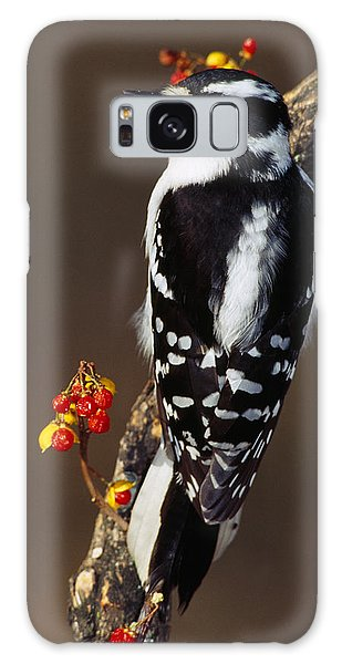 Downy Woodpecker On Tree Branch Galaxy Case by Panoramic Images