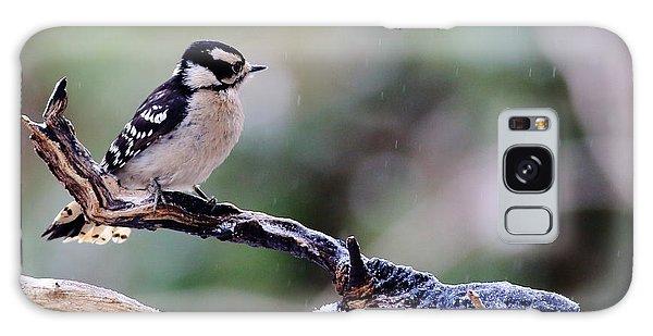 Downy Woodpecker With Snow Galaxy Case