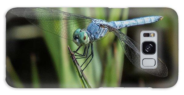 Dragonfly 13 Galaxy Case