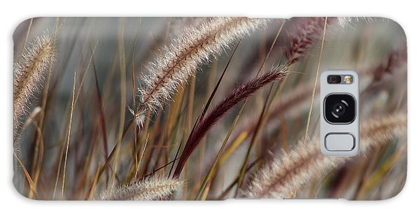 Dried Desert Grass Plumes In Honey Brown Galaxy Case
