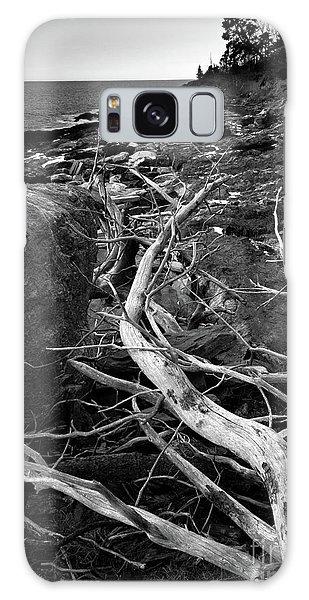 Driftwood Tree, La Verna Preserve, Bristol, Maine  -20999-30003 Galaxy Case