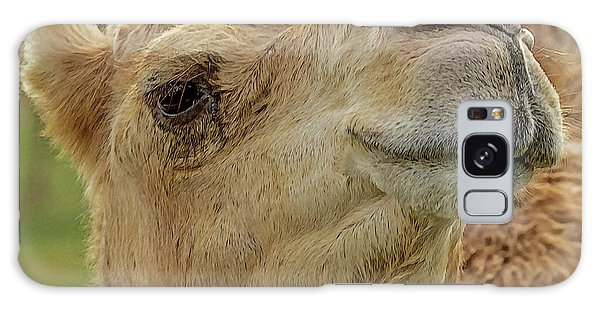 Dromedary Or Arabian Camel Galaxy Case