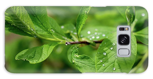 Droplets On Spring Leaves Galaxy Case