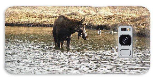 Ducks - Moose Rollinsville Co Galaxy Case