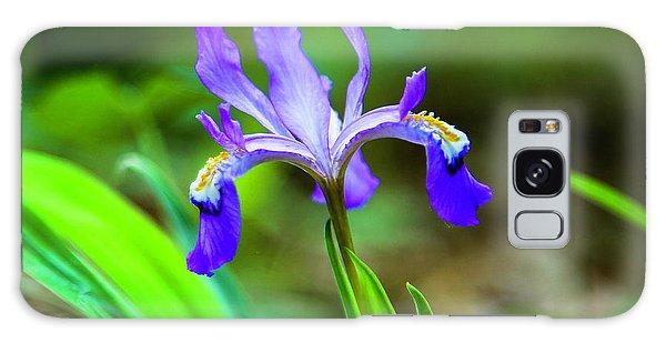 Dwarf Crested Iris Galaxy Case