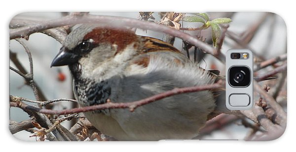 Early Bird Galaxy Case
