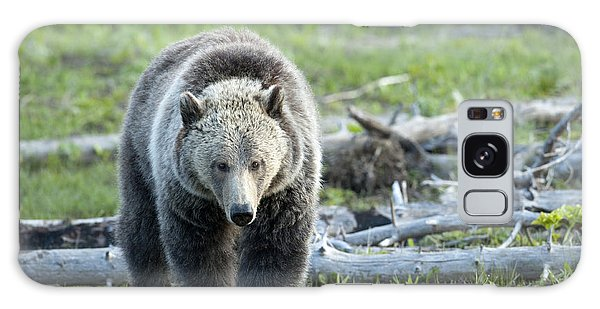 Grizzly Bears Galaxy Case - Early  Morning Search by Sandra Bronstein