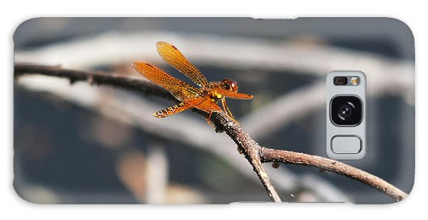 Eastern Amberwing Galaxy Case