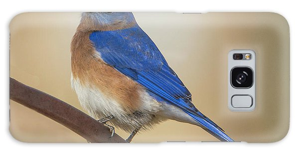 Eastern Blue Bird Male Galaxy Case