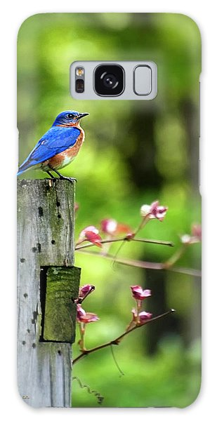 Eastern Bluebird Galaxy Case by Christina Rollo