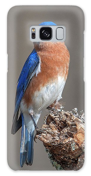 Eastern Bluebird Dsb0300 Galaxy Case
