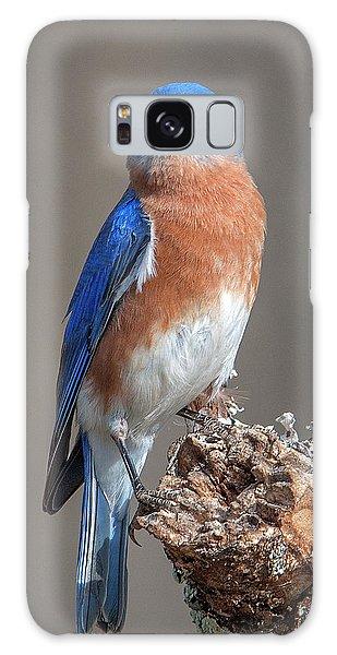 Eastern Bluebird Dsb0300 Galaxy Case