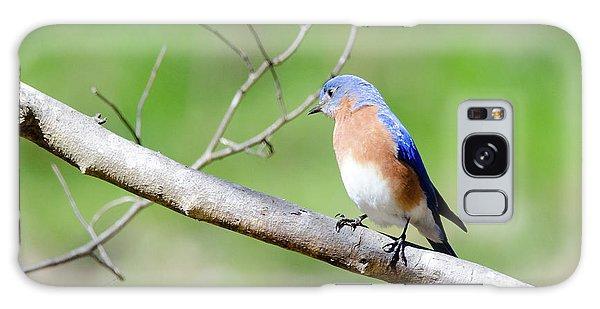 Eastern Bluebird Galaxy Case by George Randy Bass