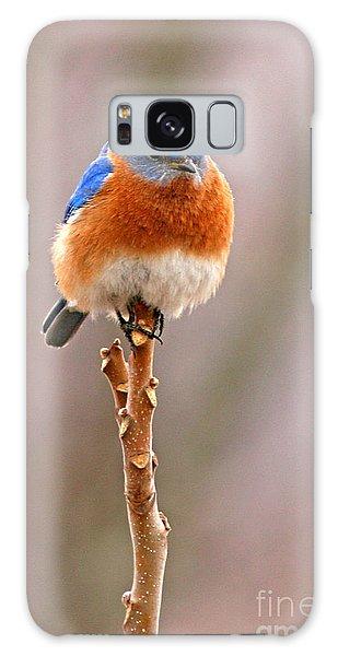 Bluebird Galaxy S8 Case - Eastern Bluebird Treetop Perch by Max Allen