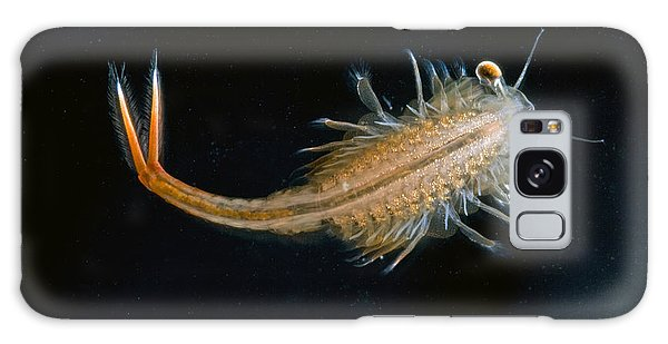 Fairy Pools Galaxy S8 Case - Eastern Fairy Shrimp Easterbrook Forest by Piotr Naskrecki