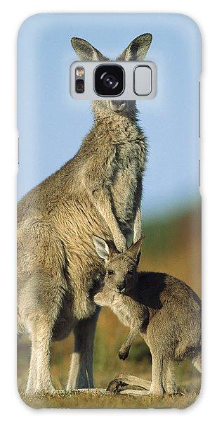 Wilsons Promontory Galaxy Case - Eastern Grey Kangaroo And Her Joey by Ingo Arndt
