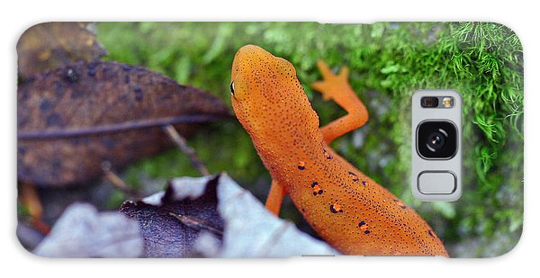 Newts Galaxy Case - Eastern Newt by David Rucker