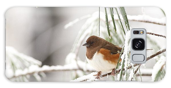 Eastern Towhee In Snowy Pine Galaxy Case