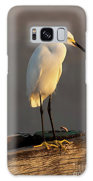 Egret Galaxy Case - Egret Glow by Mike Dawson
