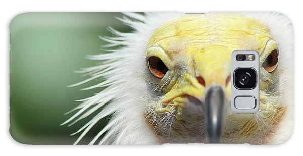 Egyptian Vulture Galaxy Case