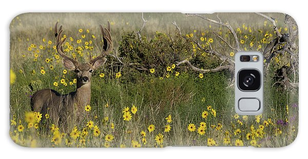 Sangre De Cristo Galaxy S8 Case - Eight Point Buck In The Grass Lands Of The Great Sand Dunes by Bridget Calip